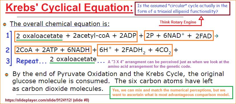 Krebs' Cyclical equation