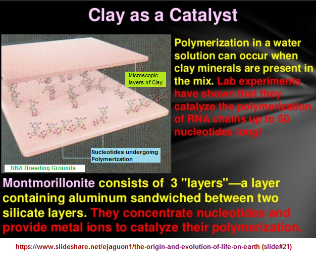 The Clay catalyst idea for biological development