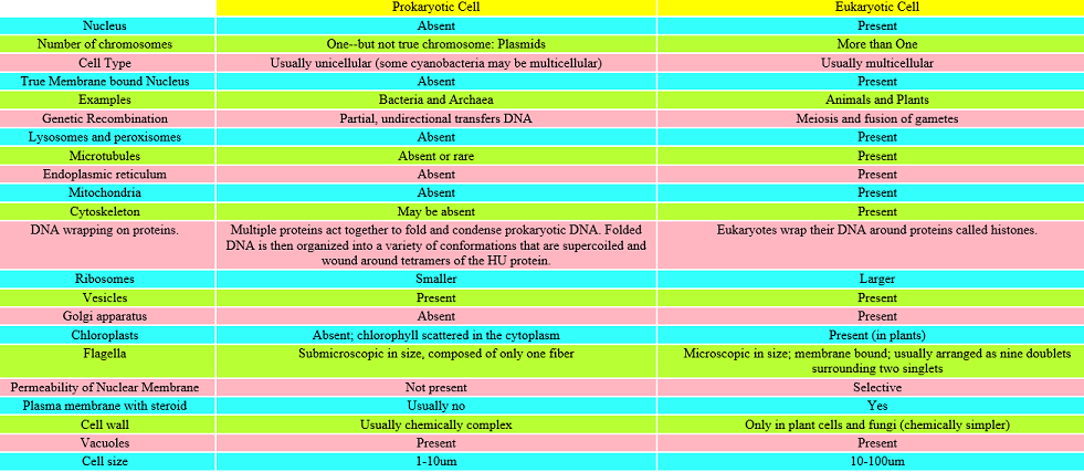 Prokayotic and Eukaryotic cells comparison