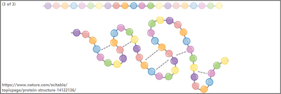 From whence does basic protein structure arise?