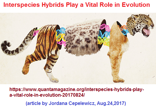 interbreeding pairs of animals to create new breeds called standards or normal