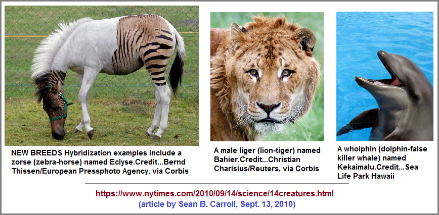 Three different examples of real hybrids