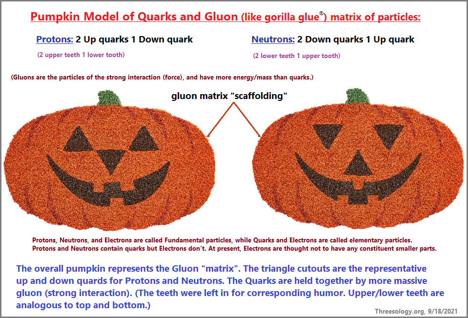 Pumpkin model of the Quark and gluon partneship