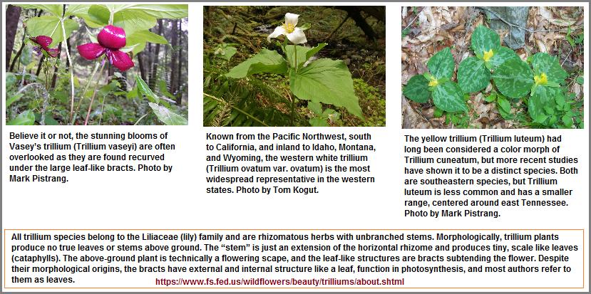 Three varities of Trilliums