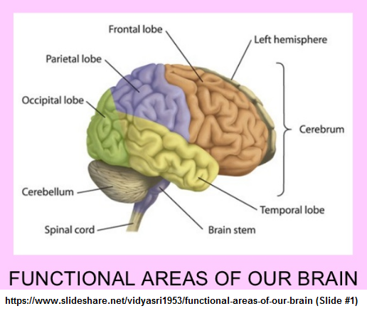 8 or 9 areas of the brain
