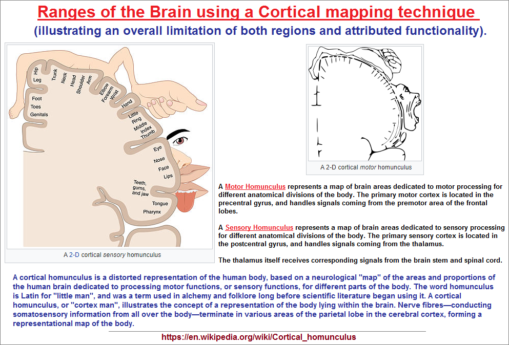 Cortical brain mapping