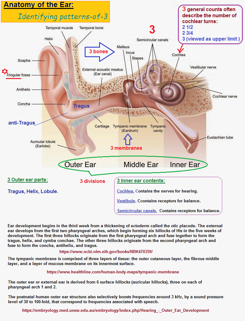 Identifying threes in ear anatomy
