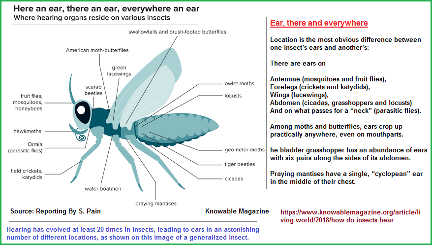 Insect_hearing