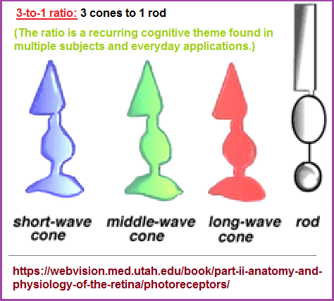 3 types of rods and 1 type of cones