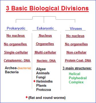 3 basic biological forms image 2