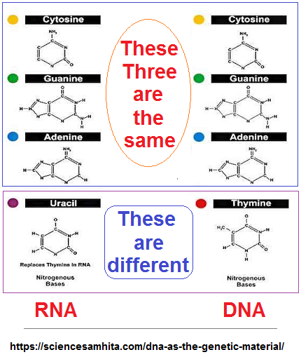 Compairing DNA and RNA image  2