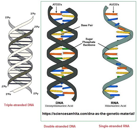 Compairing DNA and RNA image 1