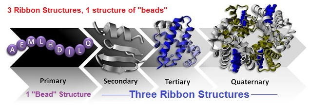 3 ribbon and 1 bead structure