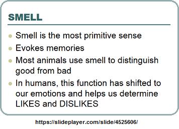 The primitive sense of smell
