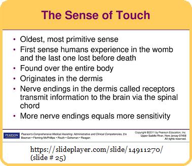 The primitive sense of Touch