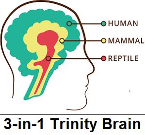 3 in 1 Trinity Brain