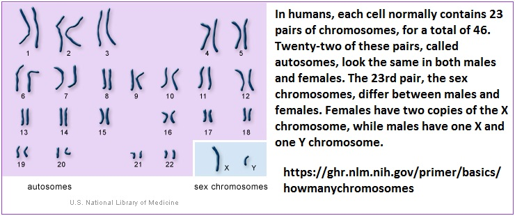 Human selfie portrait of chromosomes