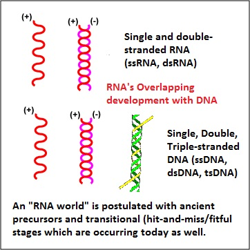 RNA and DNA overlapping strandedness