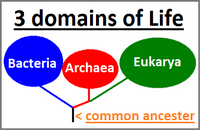 Three domains of life model
