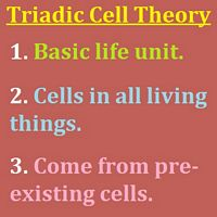 Triadic Cell Theory