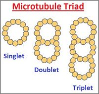 The Microtubule Trinity