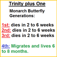 Trinity plus One Monarch butterfly generations