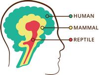 Paul MacLean's Trinity of  Brain Divisions