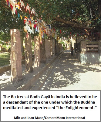 Buddha's Bo Tree