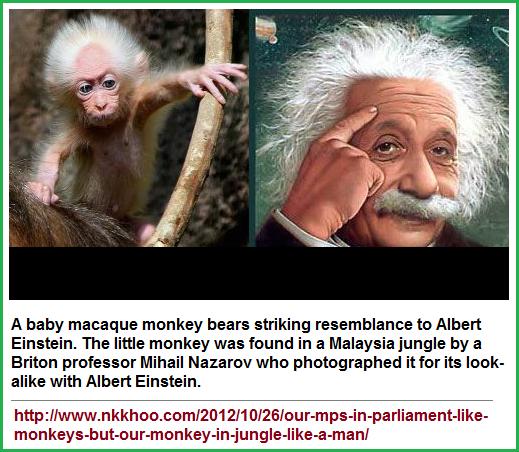 Einstenian monkey