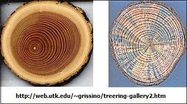 tree rings (43K)