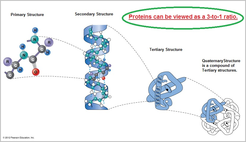 Primary, Secondary, Tertiary and Quaternary protein structures
