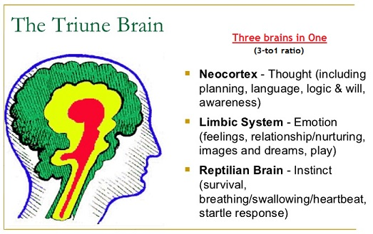 The Triune Brain perspective