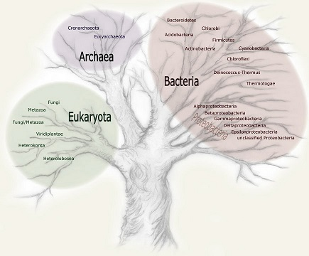 Tree of Life's 3 Domains