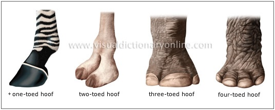 Examples of different hooves