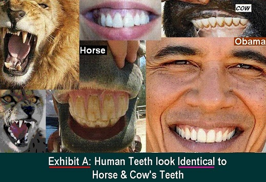 Human, horse and cow teeth are similar