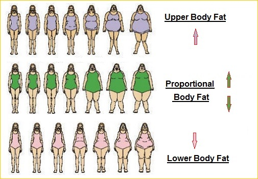 Female body distinctions of fat placement