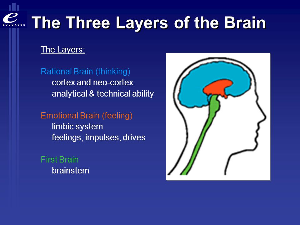 3 general categories of the brain's functions