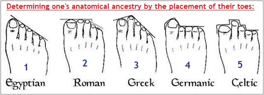 One's anatomical ancestry?