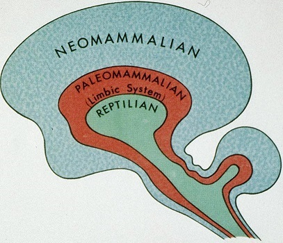 The Triune Brain Theory (92K)