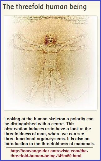 3-fold human