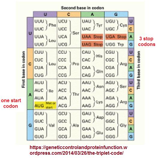 Triplet code in genetics