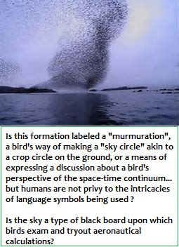 The language of murmuration