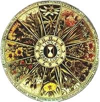Linnaeus Flower clock