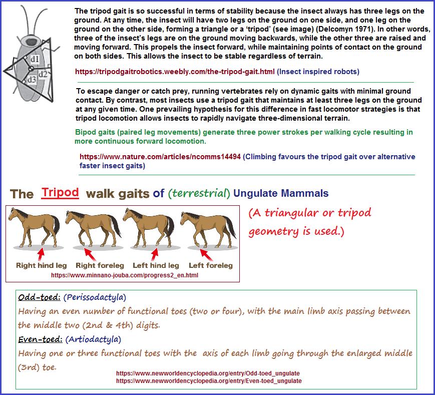 The tripod gait pattern