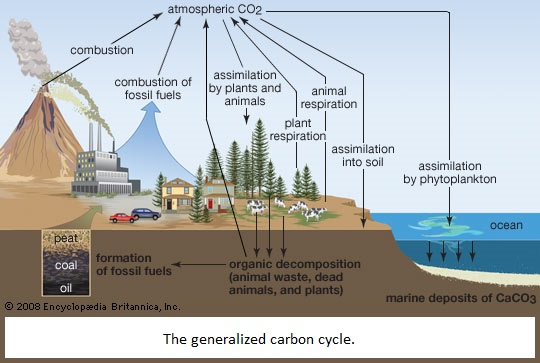Generalized Carbon Cycle