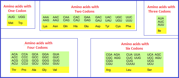 Amino acid codon counts